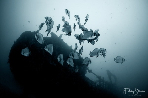 Wreck of the Alma Jane, Puerto Galera, The Philippines. by Filip Staes
