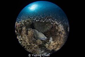 I'm the Supper Star./AKA Island, Okinawa,/ Canon 5D MarkI... by Yuping Chen