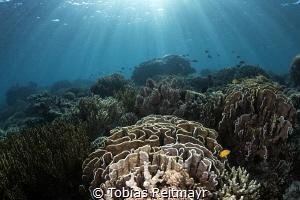 Reef scene at Tetawa Besar, Komodo by Tobias Reitmayr