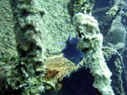 Wreck dive at Roatan July 2003 using a Caplio RR 30. by Bonnie Conley