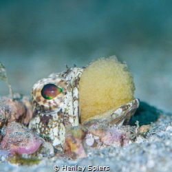 Do the Jawfish Shuffle by Henley Spiers
