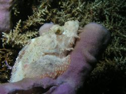 """White Scorpion"" The Tube Sponge that the Scorpion Fish w... by Damien Preston"
