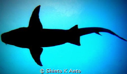 Giant Shadow / Sharks !!! My top inspiration to dive. My ... by Shinto K Anto