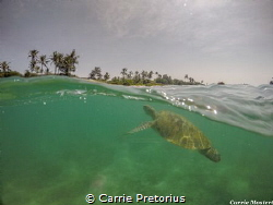 """""""Close to shore"""" Taken whilst snorkelling with a Green t... by Carrie Pretorius"""