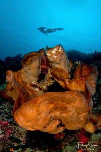 Diver at the drop off, Bunaken, Sulawesi. by Filip Staes