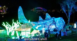 As part of this years Taronga Zoo Vivid there was these l... by Debra Cahill