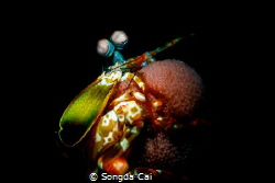 New Generation  F19 Iso 400 1/200  Retra Snoot by Songda Cai