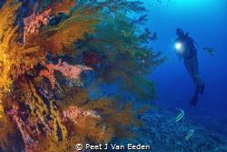 Enlightened by Peet J Van Eeden