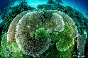 The beautiful patterns of nature in our underwater world. by Norm Vexler