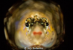 red lips from gobby celebes :) by Adji Sudarmo