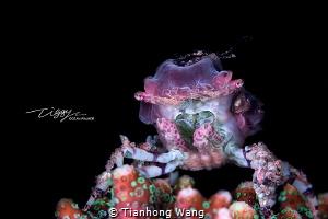 OCEAN ALIEN This guy look like an alien creature in cart... by Tianhong Wang