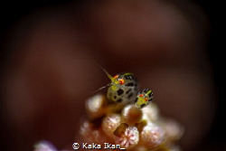 Lady Bug's by Kaka Ikan_