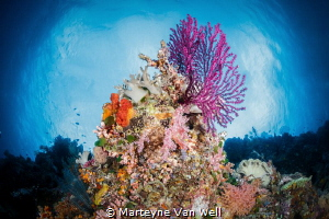 Seascape of a Wakatobi reef by Marteyne Van Well