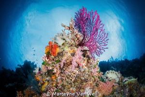 Seascape of a Wakatobi reef by Marteyne Van Well