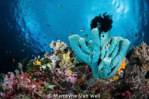 Seascape against the clouds by Marteyne Van Well