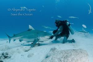 Shark Smile and Feeder, Playa del Carmen México by Alejandro Topete