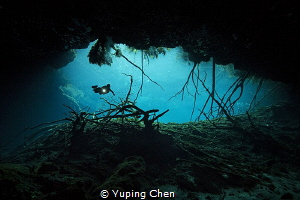 Cenote diving at Carwash, Tulum, Mexico. Canon 5D MarkIII... by Yuping Chen