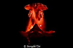 The Dark Lady by Songda Cai