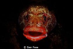 little fish big lips by Eser Paşa