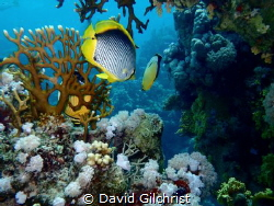 A pair of fish beckon me to follow them for an adventure ... by David Gilchrist