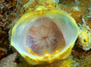 It's about all I got to give.... Longlure Frogfish Bonaire by John Roach