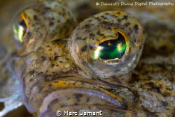 A face only a mother could love. C-O sole 100mm macro +5 ... by Marc Damant