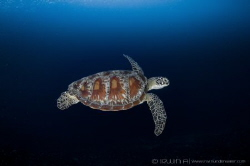 World Sea Turtle Day 2017