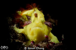 Nikon D7000, Nauticam NA-D7000