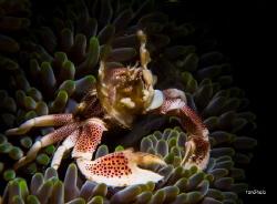 FELTERING... Porcelain Crab by Ton Ghela