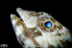 Lizard Fish by Simon Chong