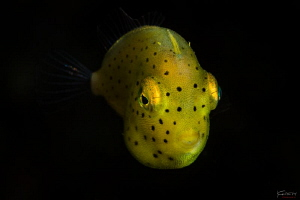 Photo name: Spotted bananas by Kelvin H.y. Tan