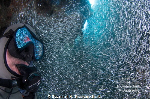 Silversides are reflected divers mask he watches huge swirl tiny fish. fish