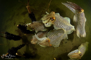Cuttlefish formation, Zeeland, The Netherlands. by Filip Staes