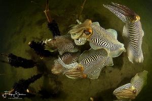 Cuttlefish formation, Zeeland, The Netherlands. by Filip Staes