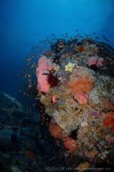 R E E F Gili Sarang/Belongas South Lombok, Indonesia. by Irwin Ang