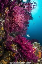 dreamin in RED France - Mediterranean Sea by Claudia Weber-Gebert