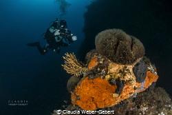 mediterranean underwater landscape........ by Claudia Weber-Gebert