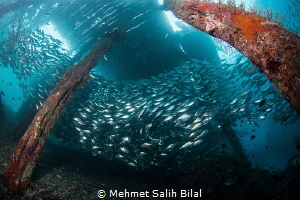 Under the Arborek jetty. by Mehmet Salih Bilal