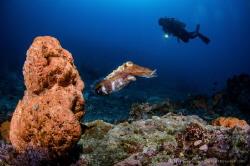 Hidden reef  Lombok (Gili), Indonesia. by Irwin Ang