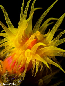 Cup coral by Beate Seiler