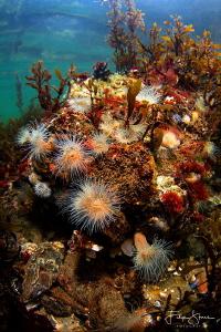 The underwater life of lake Grevelingen, Zeeland, The Net... by Filip Staes