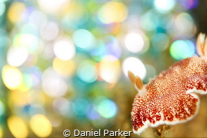 DISCO NUDI  I've been experimenting with new creative l... by Daniel Parker