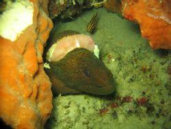 Looks like an injured moray eel. Taken in Sipadan. by Kim J Ho