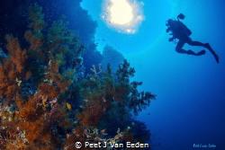 Ascending  near Situ island by Peet J Van Eeden