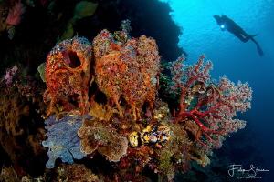 At the drop off, Bunaken, Sulawesi. by Filip Staes
