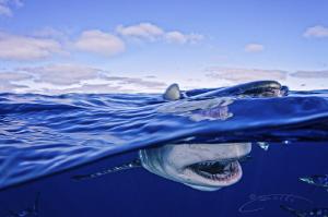 ~ Blue Horizon ~ by Geo Cloete