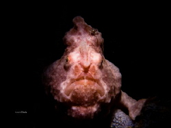 LEFT HANDED Frogfish by Ton Ghela