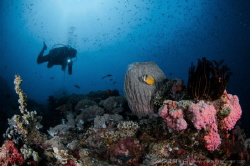 A N I L A O Sombero Island Anilao, Philippines. by Irwin Ang