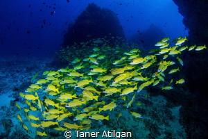 Underwater hills by Taner Atilgan