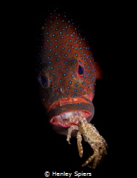 Groupers Suck by Henley Spiers